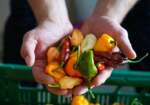 Hand mit Chilis